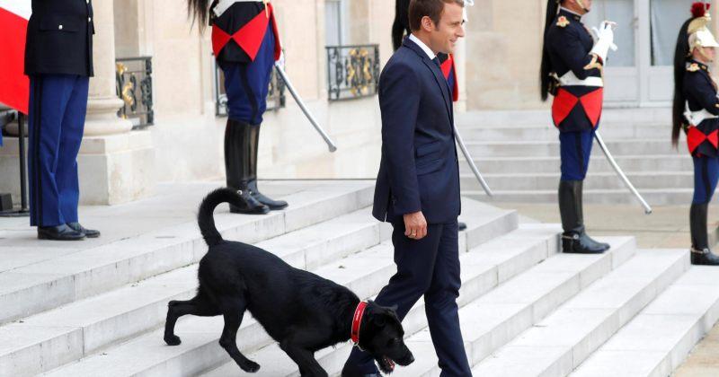 მაკრონის ძაღლი მოგიწოდებთ დღესასწაულებზე ცხოველების აყვანას პასუხისმგებლობით მიუდგეთ