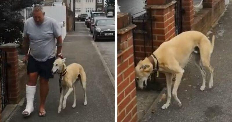 ძაღლმა ფეხმოტეხილი პატრონის მხარდასაჭერად კოჭლობა დაიწყო