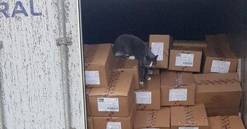 კონტეინერში 3 კვირით ჩაკეტილი კატა გადასარჩენად კანფეტებს ჭამდა