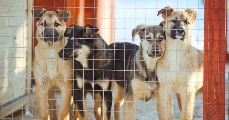 """""""ბოლო თვეების მანძილზე თბილისში იმატა ძაღლისჭირის შემთხვევებმა"""" –პროექტი ცხოველებისთვის"""