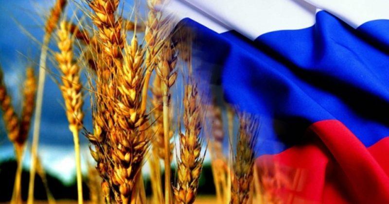 რუსეთი ხორბალს აძვირებს - საქართველოში რუსული ხორბლის წილი 90%-ს აღწევს