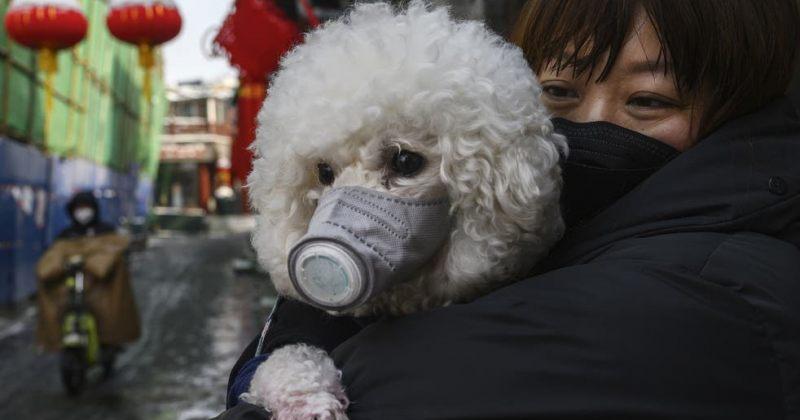 სამხრეთ კორეის დედაქალაქში Covid-19-ის ტესტს შინაურ ცხოველებსაც ჩაუტარებენ
