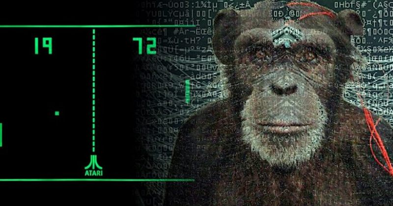 ილონ მასკს ჰყავს მაიმუნი, რომელიც გონებით ვიდეო თამაშებს აკონტროლებს