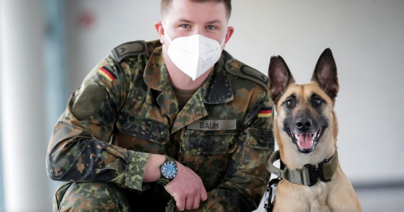 გერმანული გაწვრთნილი ძაღლები კორონავირუსს 94%–იანი სიზუსტით ცნობენ