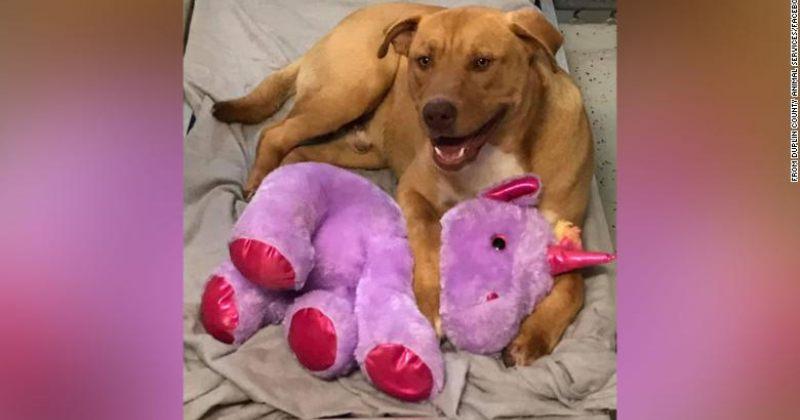 მიუსაფარმა ძაღლმა, სისუმ, მაღაზიიდან ფუმფულა სათამაშოს მოპარვა 5-ჯერ სცადა