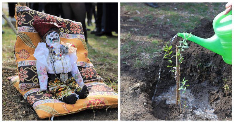 ბოტანიკურ ბაღში სერგო ფარაჯანოვის სახელობის ბროწეულის ხე დაირგო
