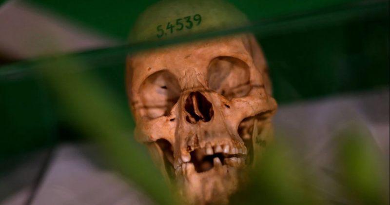 გერმანიამ ნამიბიაში კოლონიურ პერიოდში ჩადენილი მკვლელობები გენოციდად აღიარა