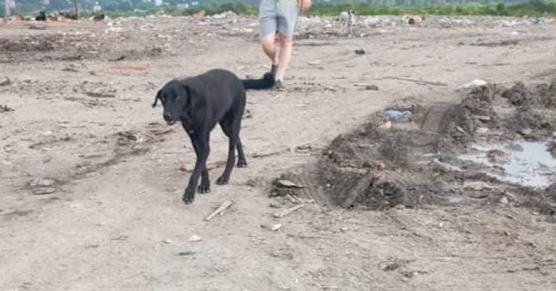 გადაყრილი ძაღლები ნაგავსაყრელზე - მოქალაქე წერს, რომ ეს ბათუმის მერიის ბრძანებით ხდება