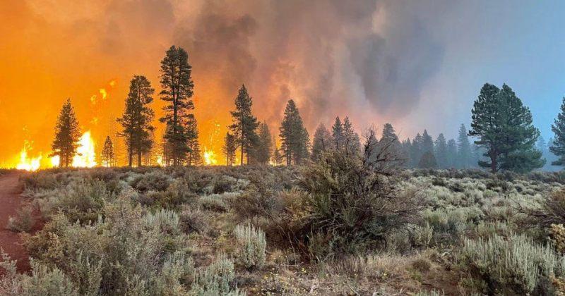 საგანგებო: მომატებული ტემპერატურის გამო ტყის ხანძრების რისკი იზრდება – არ დაანთოთ ცეცხლი